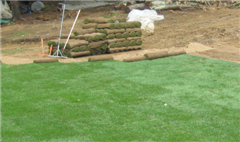 Complete Lawn Install Services